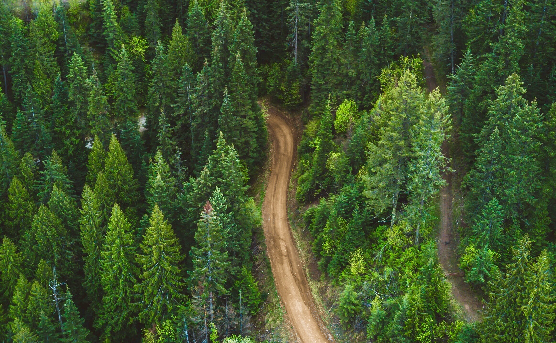 Forest trees wilderness journey